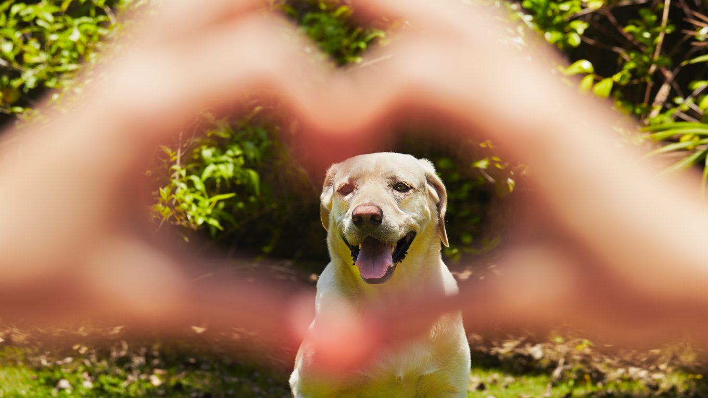 Mascotas mejoran la salud de las personas