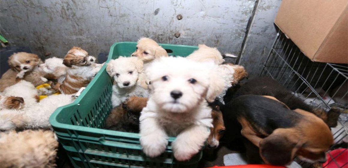 Barcelona: multan a dos webs por venta de animales
