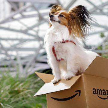 EE.UU: Amazon se vuelve Pet Friendly