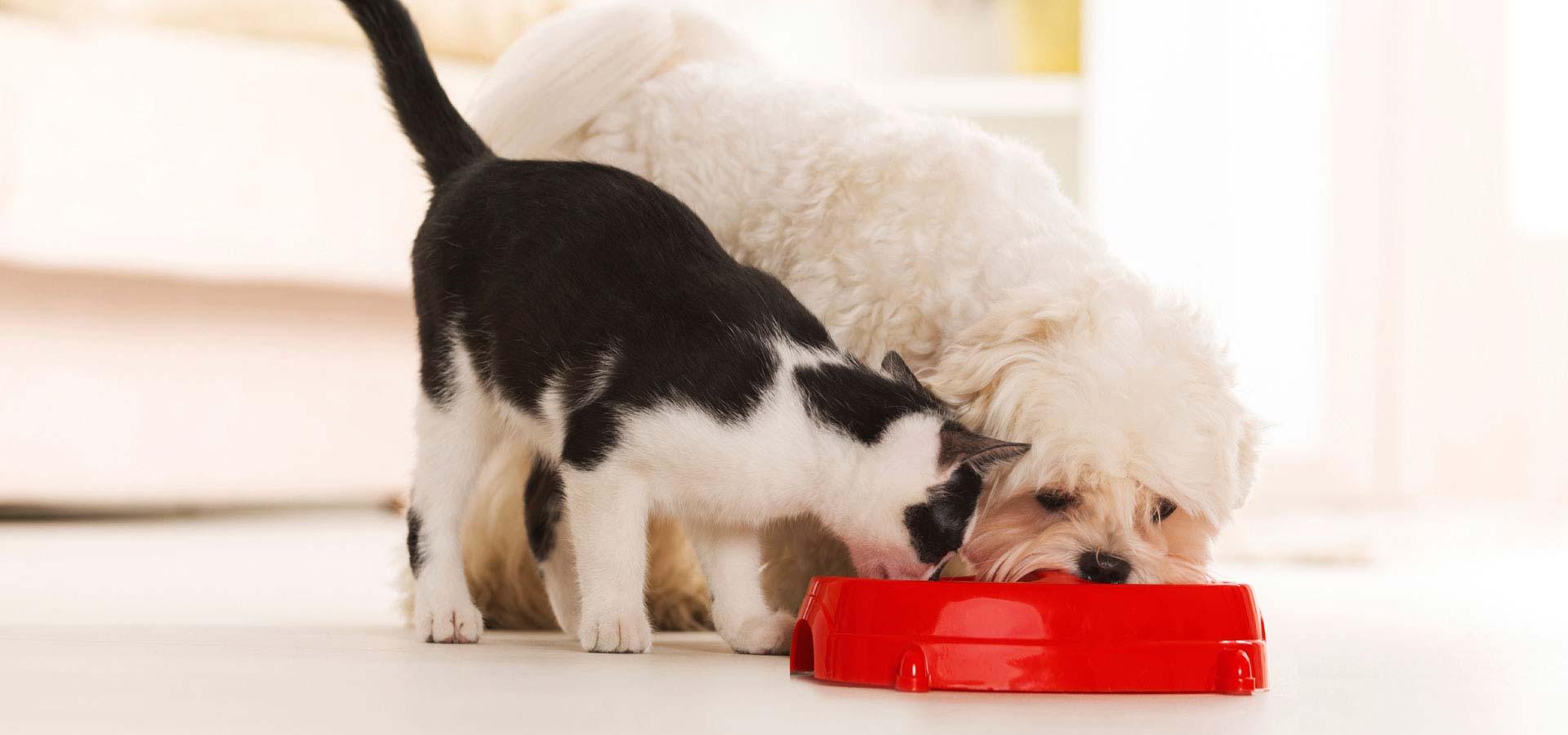 Alimentar a nuestras mascotas: ¿comida industrial o casera?