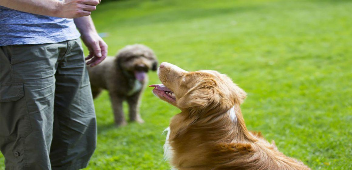 Educar a nuestros perros no es fácil