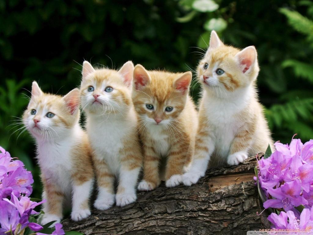 Planean poner en adopción a gatos en Estados Unidos