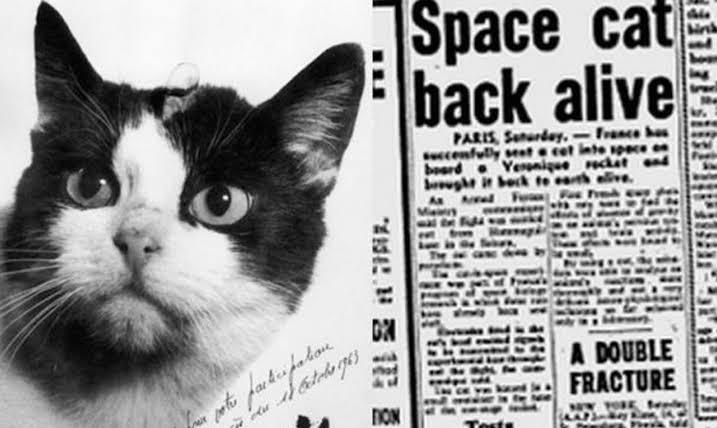 Félicette: el primer y único gato en ir al espacio