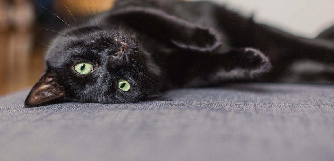 ¿Cómo prevenir las lombrices en los gatos?