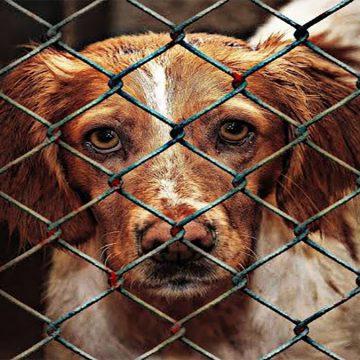 Barcelona demanda a tienda de animales por maltrato