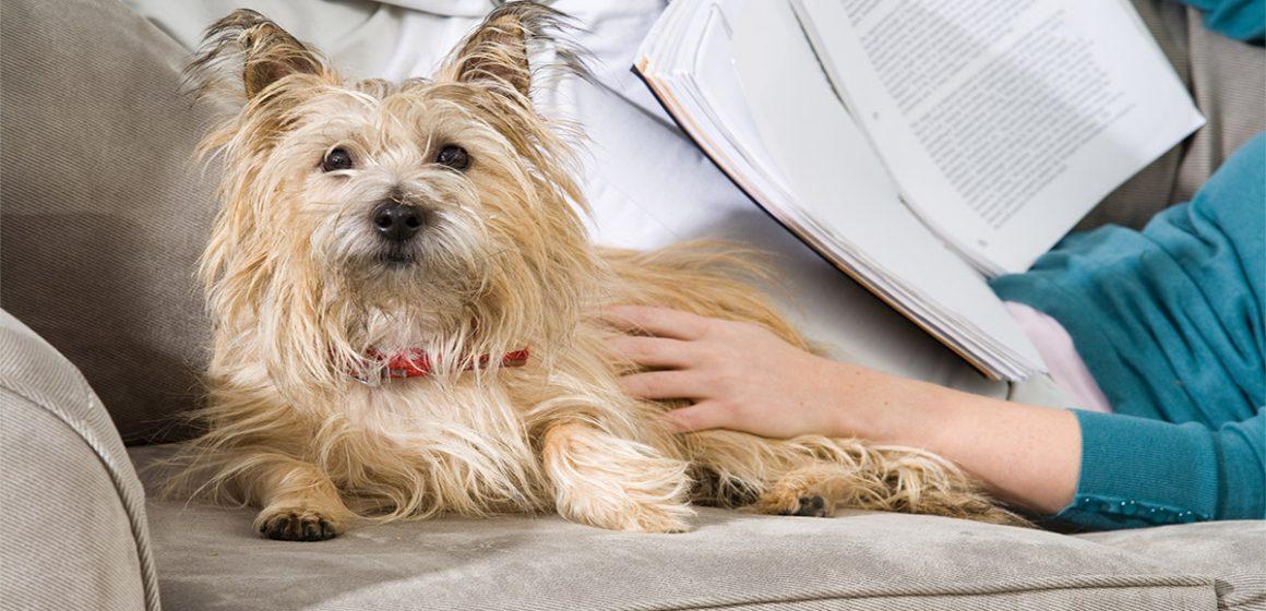 Consejos para evitar los pelos de tu mascota