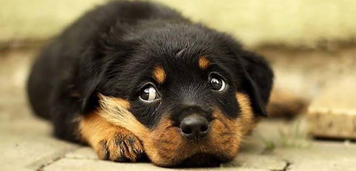 Aumenta el impacto de las mascotas en el Perú