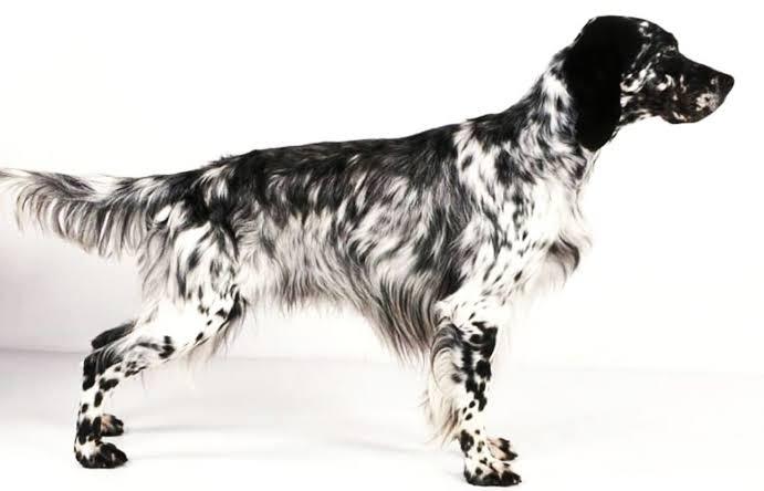 perro 5