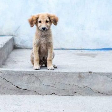 En Holanda no hay perros abandonados