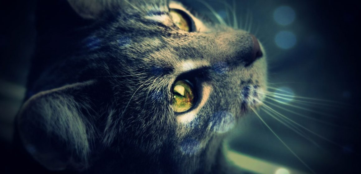 Poderes premonitores de los gatos