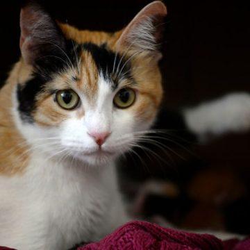 Las personas que les encantan los gatos tendrían un coeficiente intelectual más alto