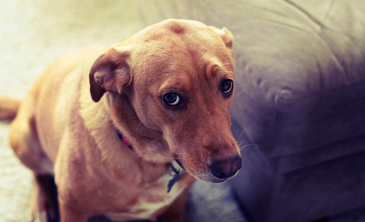 Entrenar a un perro con gritos puede dañar su salud