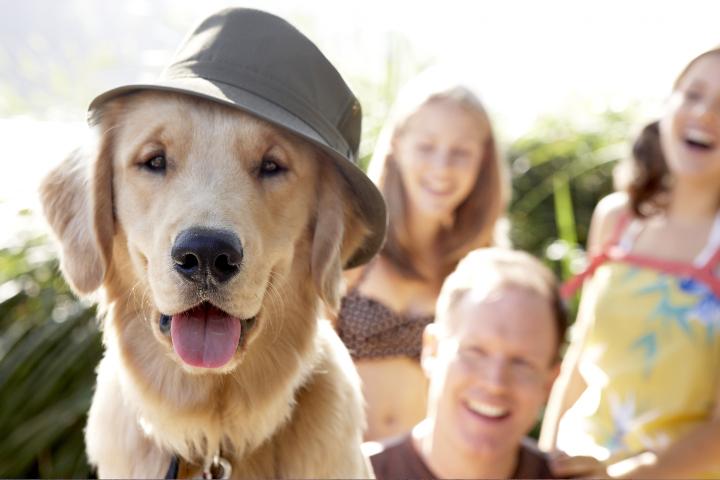 Reniac ofrece documentos de identidad para mascotas