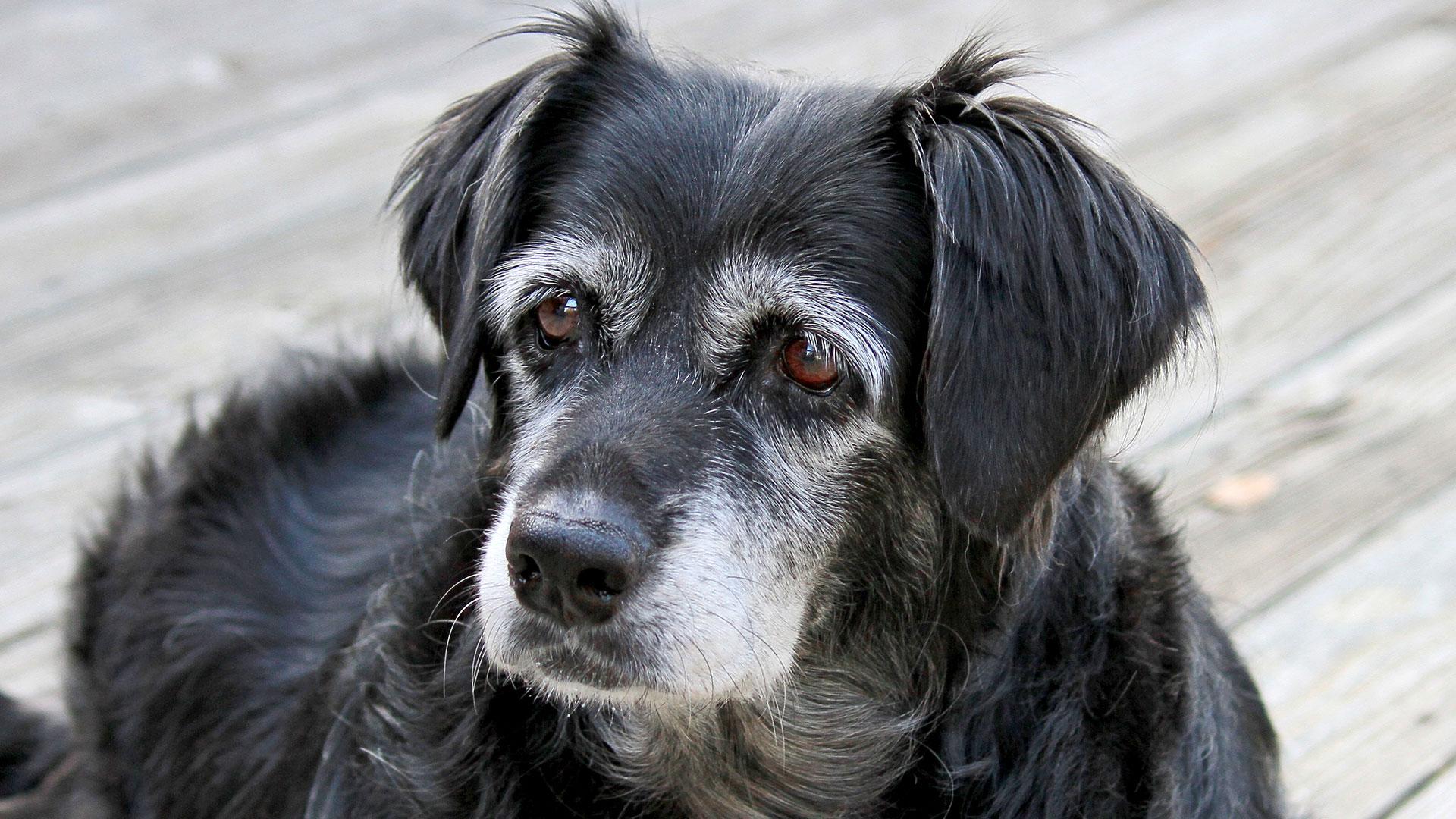 Perros no cumplen años de siete en siete