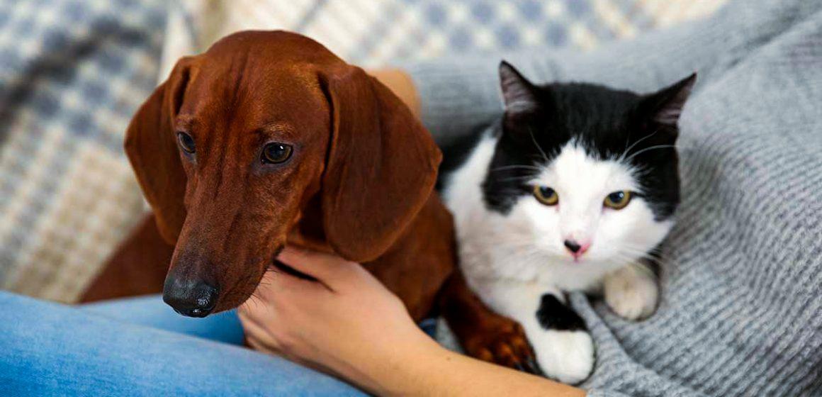 Dueños invierten en mascotas hasta un 20% de sus sueldos