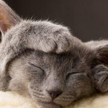 Saber identificar si un gato siente dolor