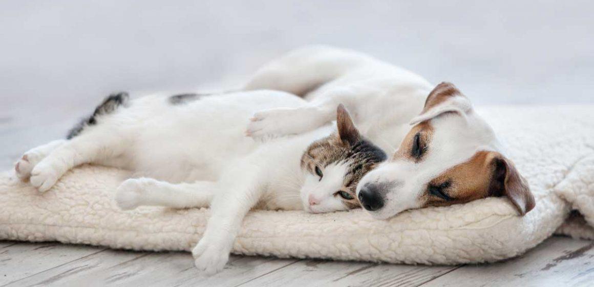 Importancia de esterilizar a nuestras mascotas
