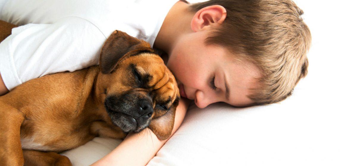 Dormir con tus mascotas: ventajas y desventajas