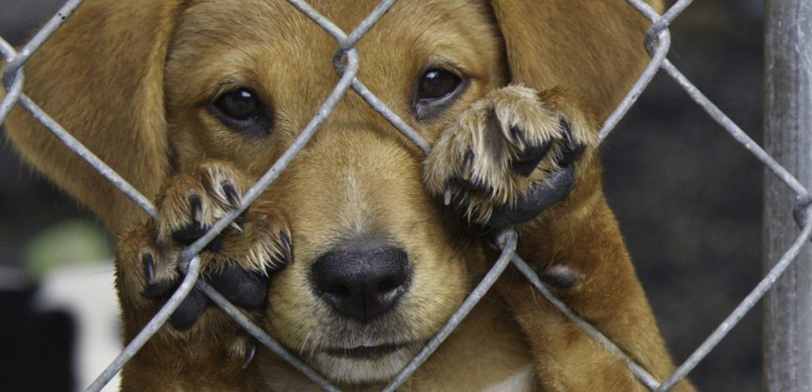 Estados Unidos penalizará el maltrato animal como delito federal
