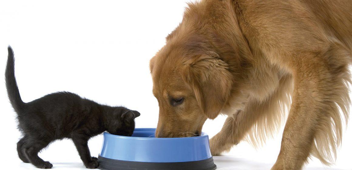 ¿Sabes cuándo cambiar la dieta de tu mascota?