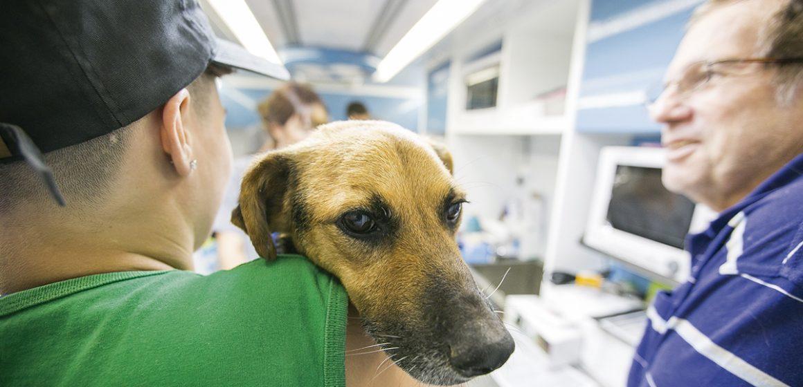 La castración de mascotas: ventajas y desventajas