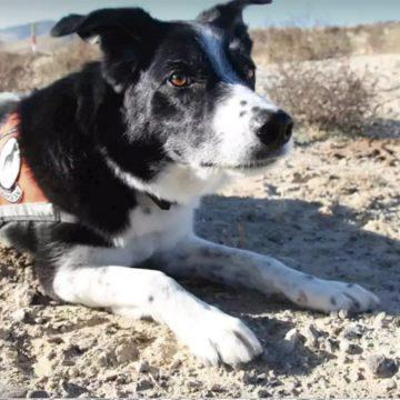 ¿Sabías que existen perros guardianes de especies en peligro de extinción?