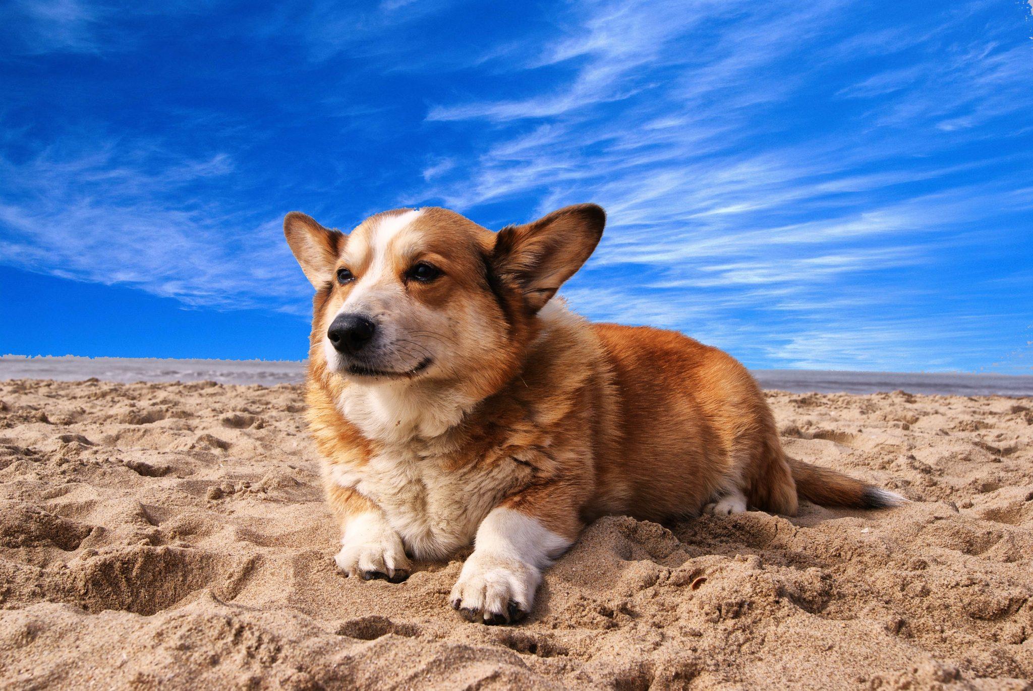 Perros durante el verano: Cuidados básicos