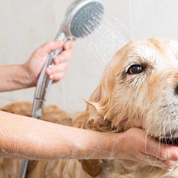 ¿Cómo mantener la higiene en nuestras mascotas?
