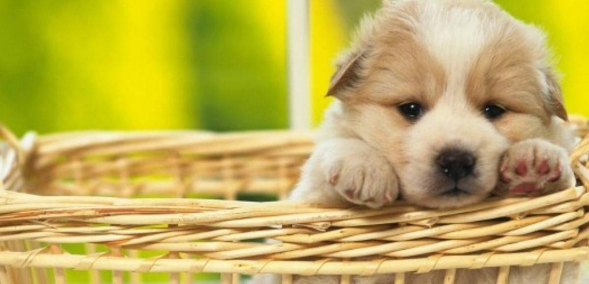 Evento pondrá en adopción a más de 50 perros y gatos