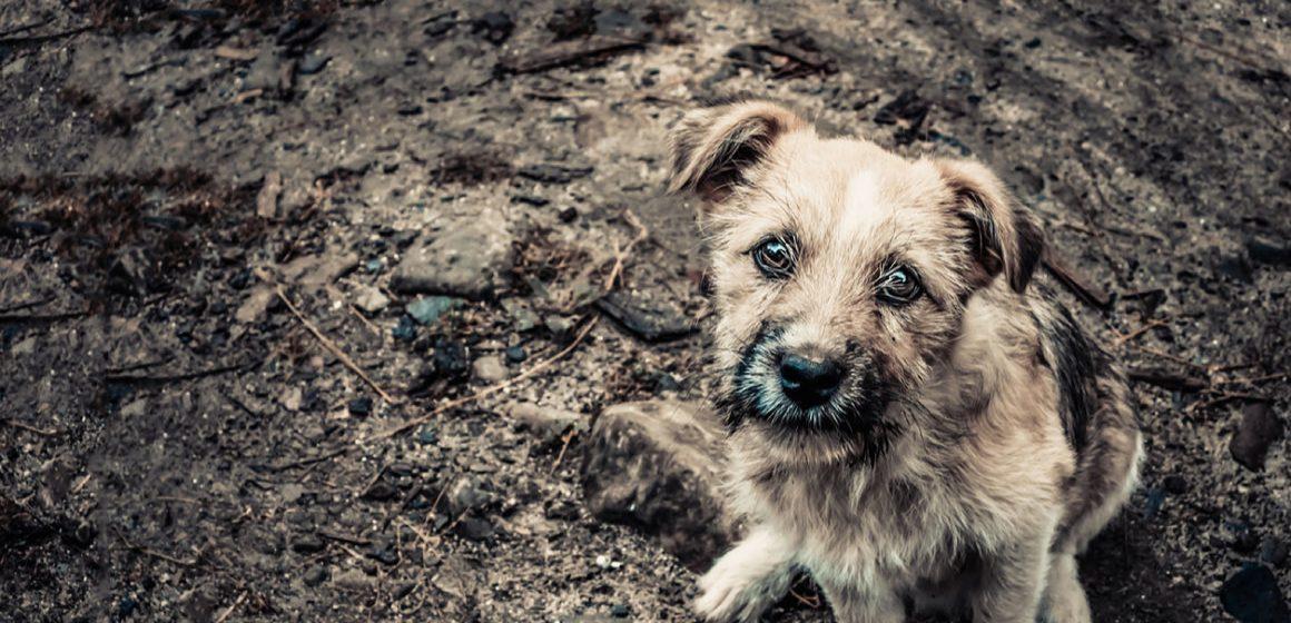 7 de cada 10 mascotas son abandonadas en México
