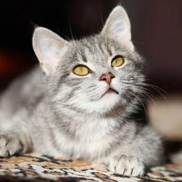 6 cosas que los gatos odian de sus dueños