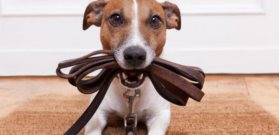Crean app móvil para pasear perros