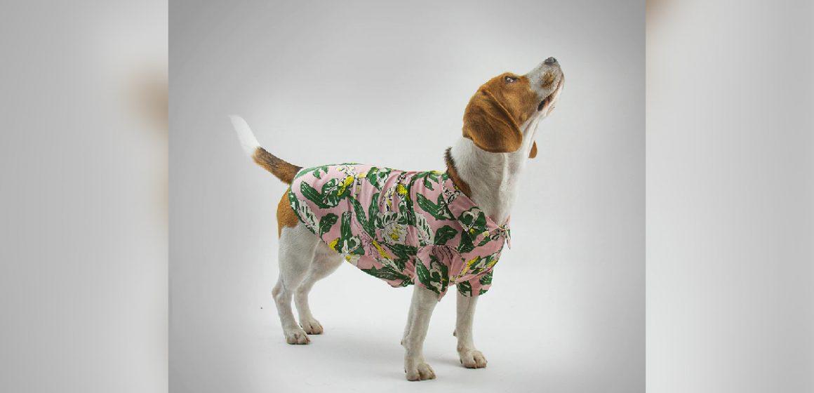 Marca peruana diseña ropa para dueños y mascotas