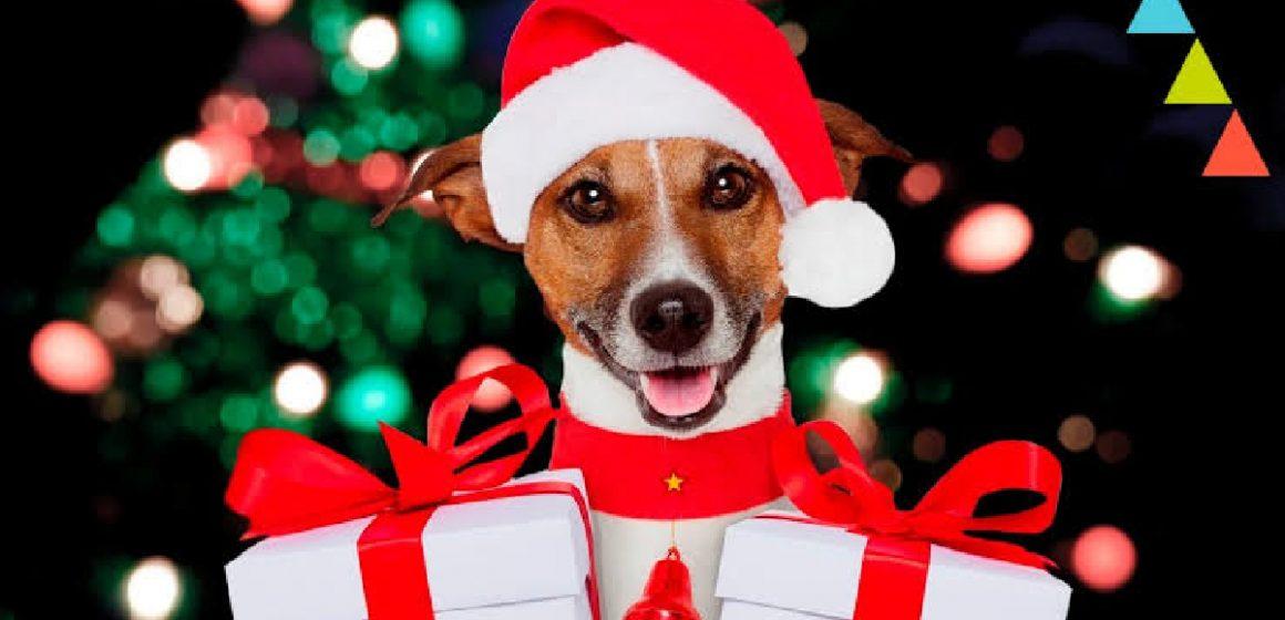 3 platillos para nuestras mascotas por Navidad