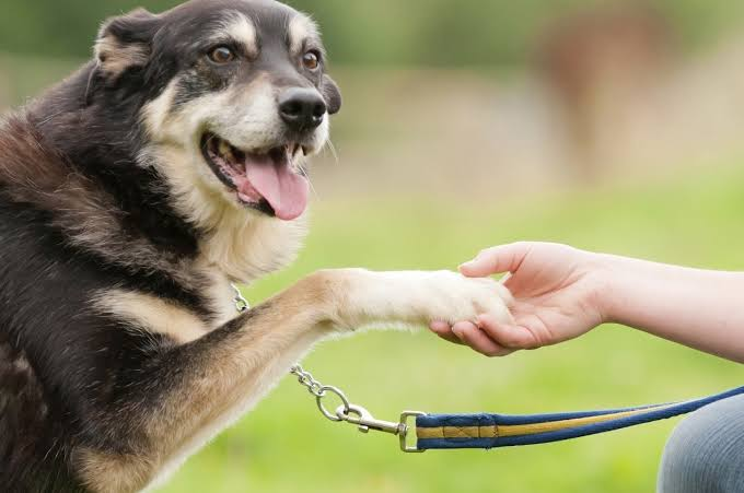 Estudio demuestra por qué nuestros perros nos dan la pata