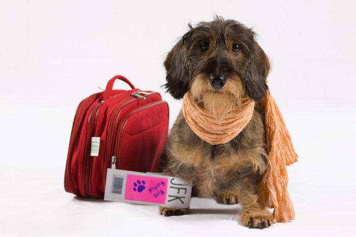 Recomendaciones para mudarte con tu mascota