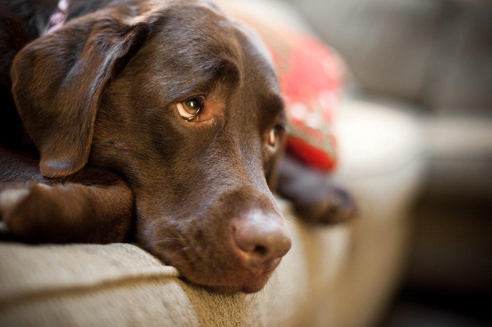 Gritar a un perro trae efectos negativos según estudio