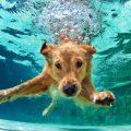 10 razas de perros incapaces de nadar