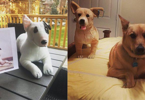 ¡Increíble! Ahora puedes tener peluches personalizados de tus mascotas