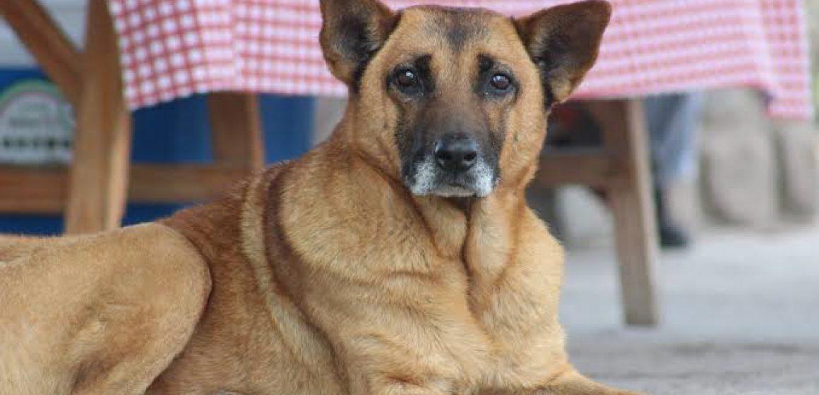 Perro callejero ayuda a Pitbull a ser liberado