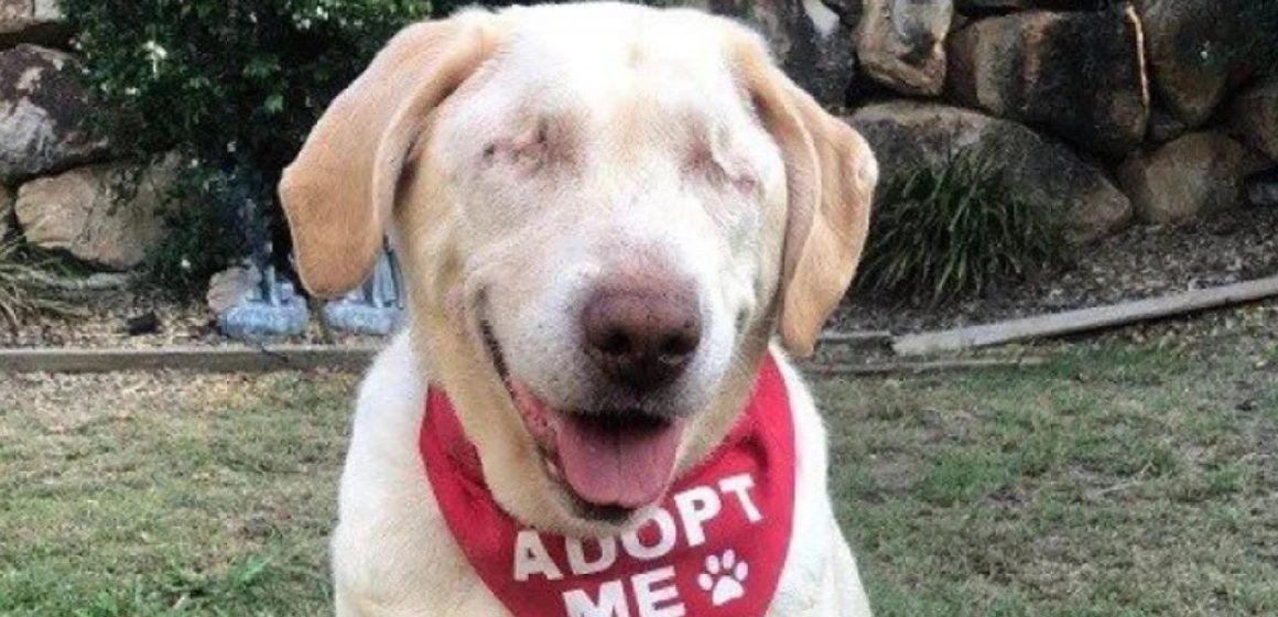 Dumpling: la labradora que encontró un hogar luego de ser abandonada