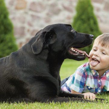 6 razas de perros más tranquilos para criar en casa