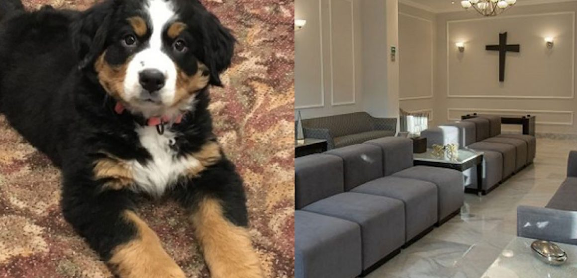 Perro es adoptado para consolar a familias durante funerales