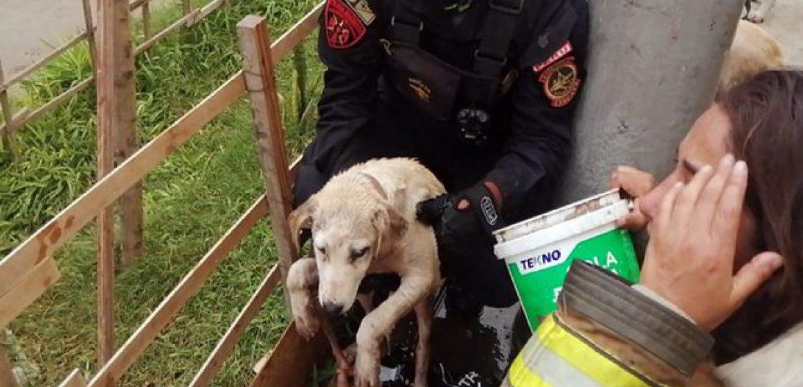 Bomberos salvaron a perros de incendio