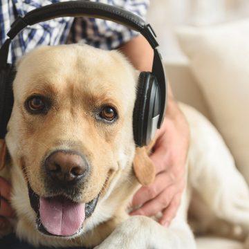 Spotify lanza playlists para mascotas