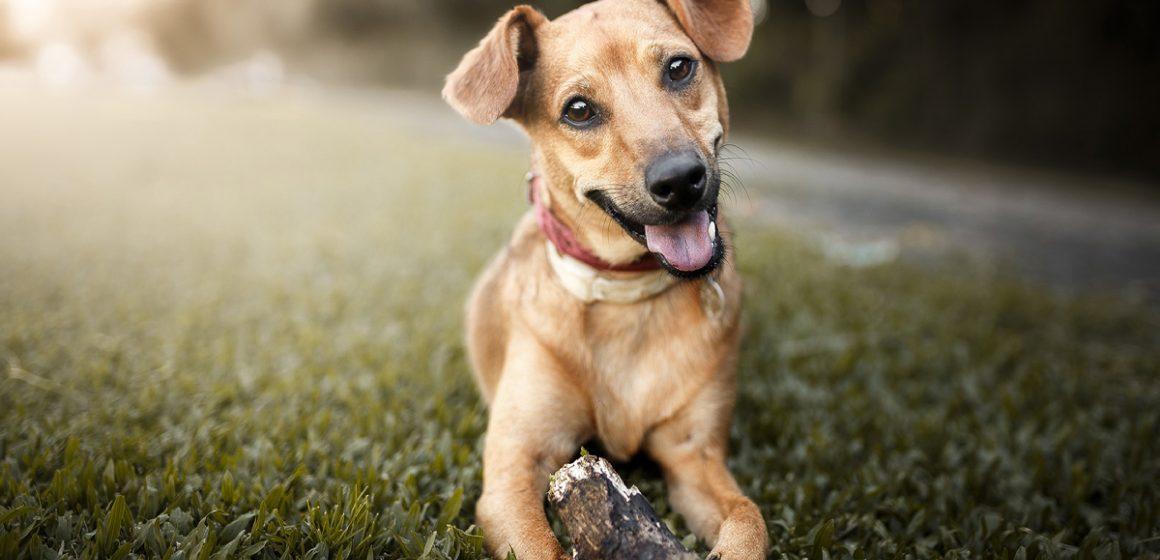 México: Primer país libre de rabia humana transmitida por perros