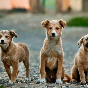 México entrenará a perros callejeros como rescatistas o policías