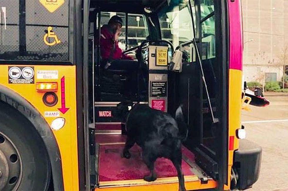 Viral: perro aprendió a tomar el autobús para irse a jugar al parque