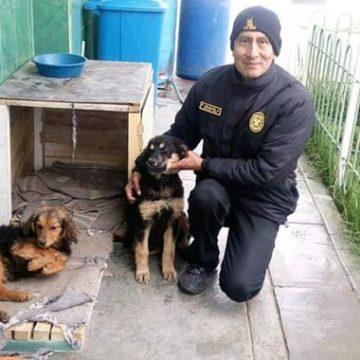 Policía construye casas para perros sin hogar