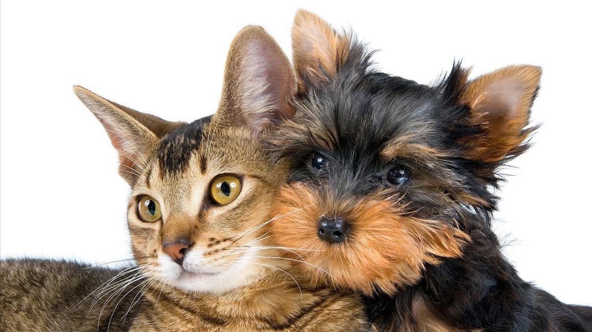 Adopción: requisitos para darle un hogar a una mascota